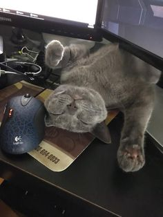 My dad sent me this while he was playing flight simulator by flowercop cats kitten catsonweb cute adorable funny sleepy animals nature kitty cutie ca