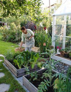 Home Decorators Collection Rugs Key: 3960791590 Garden Cottage, Garden Beds, Farm Gardens, Outdoor Gardens, Rustic Gardens, Indoor Garden, The Secret Garden, Garden Plants Vegetable, Greenhouse Gardening