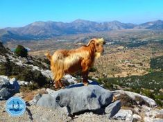 Walking on Crete walking holidays 2021 Walking Holiday, Going On Holiday, Holiday News, Sun Holidays, Fun Activities To Do, Crete Greece, Life Goes On, Photo Book, Perfect Place