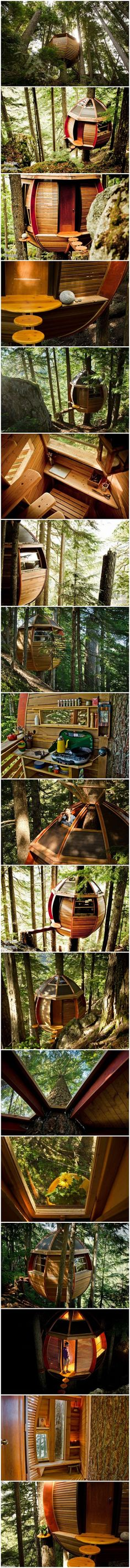 Doesn't get too much cooler than this: Hidden Egg Tree house, Vancouver Island.