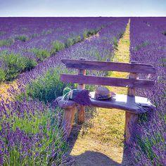 Super Ideas For Garden Cottage Lavender Fields