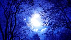 Fantasy art trees forest moon night clouds dark moonlight wallpaper and background Night Sky Moon, Night Clouds, Night Skies, Tree Photography, Background For Photography, Moonlight Photography, Halloween Photography Backdrop, Nature Landscape, Moon Pictures