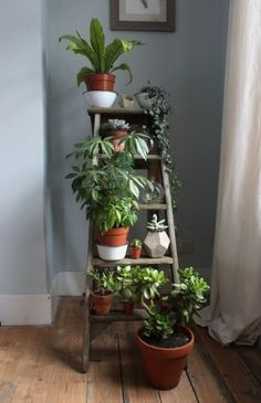 The new darling - a pretty, old ladder! - Flure -You can find Old ladder and more on our website.The new darling - a pretty, old ladder! Large Plants, Cool Plants, Green Plants, Green Cactus, Shade Plants, Cactus Flower, Plantas Indoor, Decoration Plante, Green Decoration