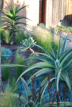 Drought tolerant and sustainable - LandscapeResource.com