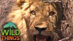 Makadikgadi: Wild Animals Of Botswana | [Predators And Preys Documentary... Save Wildlife, Wild Animals, Predator, Documentary, Habitats, Survival, Africa, The Documentary, Documentaries