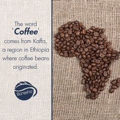 #CoffeeFact: The word 'coffee' comes from Kaffa, a region in #Ethiopia where #coffee beans originated. #Beverages #Facts #Drinks #DidYouKnow