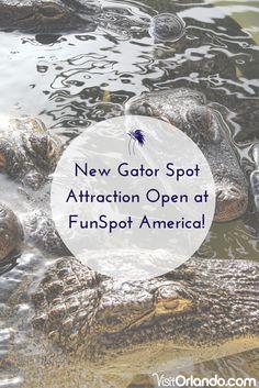 New Gator Spot Attraction Open at FunSpot America! #Orlando #Vacation #Travel