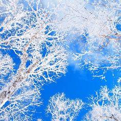 【yuripepe1218】さんのInstagramをピンしています。 《2日連続の山✨ ほんとは奈良の明神平に行く予定やったけど天気予報見てると晴れではなさそう、、、 どうしても晴れてるとこに行きたくて天気予報で確実に晴れそうだった富士見台高原へスノーシューハイク⛄✨ 求めてた青空と樹氷が見れて大満足 #富士見台高原#中央アルプス#恵那山系#冬山#雪山#スノーシュー#日帰りハイキング#青空#樹氷#白#青#山#森#空#自然#好山病#登山#山が好き#風景#雪景色#山登り#登山#絶景#晴天 #japan#winter #snow#bluesky #mountain#climbing#trekking》
