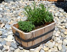 A Pretty Life in the Suburbs: Planting Outside the Box