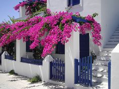 beautiful house in Paros, Greece Bougainvillea, Places Around The World, Around The Worlds, Beautiful Flowers, Beautiful Places, Menorca, Landscaping Plants, 4th Of July Wreath, Decoration