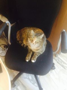 What do you want? This is my chair