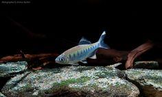 aqua-global's photo.