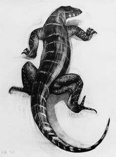 savannah monitor coloring pages | Vector hand drawn monochrome lizard or salamander with ...