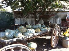 blue pumpkins on wagon by Dennis311, via Flickr