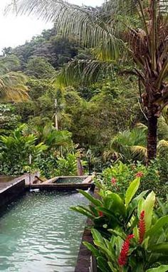 Crescent Moon Cabins. Best place on Dominica! discountattractions.com