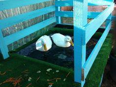 love the ducks!