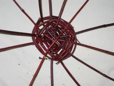 Red Osier Dogwood, Red Twig Dogwood, Survival Stuff, Camping Survival, Earth Craft, Garden Shrubs, Don't Judge, Ceiling Fan, Raising