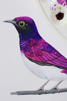 Violet backed starling | Gouache + Watercolor Painting by PRINTSPIRING. Follow: www.instagram.com/printspiring
