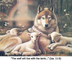 Jesus Christ wolf   Is there a verse in the Bible that says the lamb and lion will lie ...
