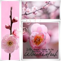 """Quote ~ """"Life........"""" by Audrey T"""
