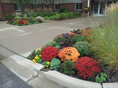 Beautiful fall color at a commercial property maintained by Barrett Lawn Care. #mums #kale #pansies #fallflowers
