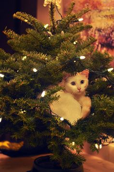 I iz ornament? Only a cat (or a bird) would consider this an appropriate resting spot!