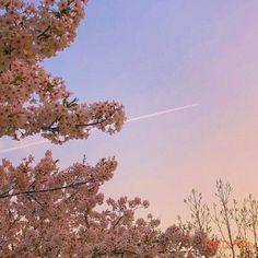 ღ 𝘱𝘪𝘯𝘵𝘦𝘳𝘦𝘴𝘵 - 𝘪𝘬𝘪𝘵𝘵𝘪𝘴𝘤𝘳. Nature Aesthetic, Flower Aesthetic, Aesthetic Photo, Pink Aesthetic, Aesthetic Pictures, Images Esthétiques, Pretty Sky, Story Instagram, Belle Photo