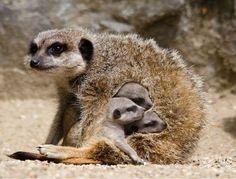 Cuddling with mom.