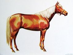 1960s PALOMINO HORSE Illustration Poster   vintage extra by cammoo, $16.00