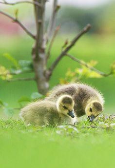 Looook, how cute!