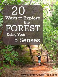 Explore the forest using your 5 senses. Great nature activity for children from Mommy Loves Trees. #outdoorfamilies