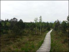 Bohlenweg durchs Murnauer Moos