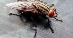 Receita caseira para acabar com os insetos na sua casa