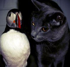 Cat & Puffin