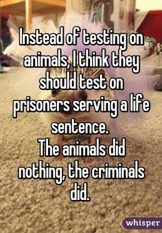 """""""Instead of testing on animals, I think they should test on prisoners who committed the crime of animal abuse/serving a life sentence. The animals did nothing, the criminals did. True Quotes, Funny Quotes, Whisper Quotes, Whisper Confessions, Whisper App, Describe Me, Faith In Humanity, I Can Relate, So True"""