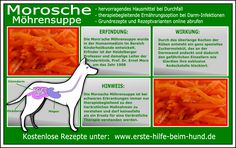 Moro'sche Karottensuppe Hintergrundwissen, das Grundrezept und Rezeptvarian… Moro's carrot soup background knowledge, the basic recipe and recipe variations Havanese Puppies, Chihuahua Dogs, Pet Dogs, Dog Cat, Vet Med, Carrot Soup, Dog Id Tags, Food Bowl, Dogs Of The World