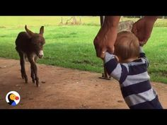 Baby Donkey Meets Baby Boy | When this baby donkey saw a baby boy, he went running to meet him. Love Animals? Subscribe: https://www.youtube.com/channel/UCIN...
