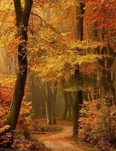 52 Ideas Photography Autumn Leaves Paths For 2019 Beautiful Places, Beautiful Pictures, Amazing Places, Beautiful Forest, Beautiful Mind, Autumn Scenes, Fall Pictures, Forest Pictures, Pathways