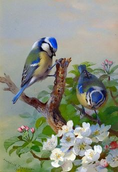 "ART BIRDS~ ""I Wish You Bluebirds In The Spring, To Give Your Heart A Song To Sing, And Then A Kiss. . .But More Than This. . . .I Wish You Love!""~  Vintage Painting On Canvas~ Artist: Archibald Thorburn 1923~  ( And Song. . .Natalie Cole )"