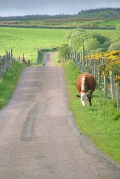 driving along country roads in harmony with nature and all the animals that live there. Country Charm, Country Life, Country Living, Country Roads, Country Style, The Animals, Vie Simple, Country Scenes, Back Road