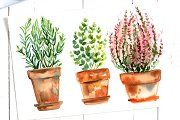 Watercolor herbs and flowers in pots - Illustrations - 2