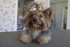 Trend Pet Alert: um corte novo cheio de estilo para o seu pet