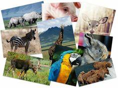 50 Beautiful Animals HD Wallpapers Set 27