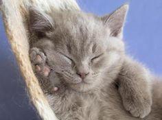 kitty sleep