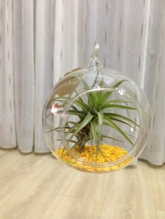 Air plant decoration, lovely piece of heaven