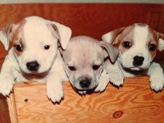 Sweetest puppies ever!