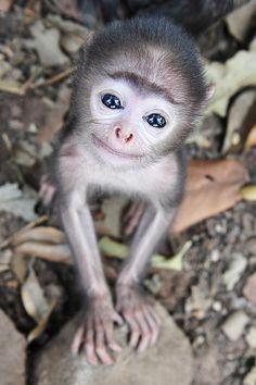 A tiny, smiling monkey looking up towards the camera.