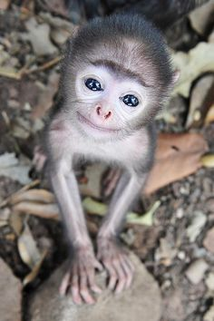 A tiny, smiling monkey looking up towards the camera.