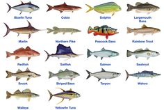 gamefish - Google Search