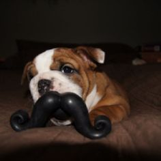 Daisy with her Stachtastic puppy toy